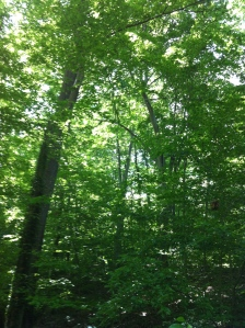 And yet the east coast can be so green, and so lush...