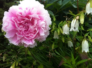 I started this day in a place with peonies; what will I find blooming in my destination?