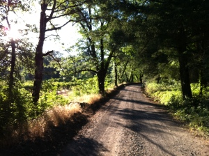 The road where I learned to become a runner; it is peaceful and meditative.