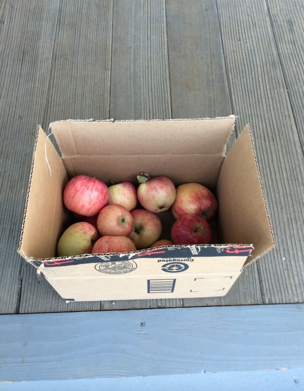 The happiest way to recycle a box from Amazon may well be a yummy ol' pile of autumn on my porch.