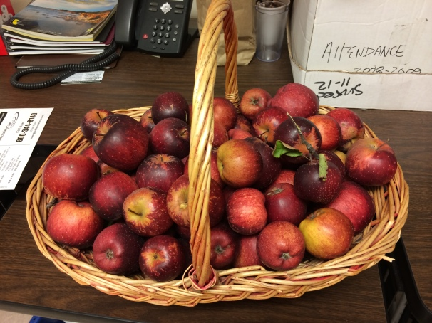 Grateful for baskets of apples that appear at work.
