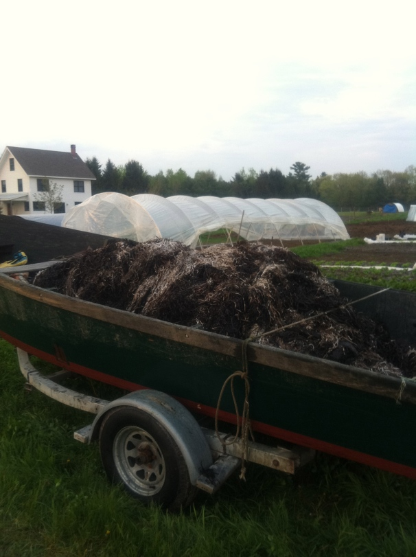 On second thought, maybe my favorite chore was mulching with local seaweed.