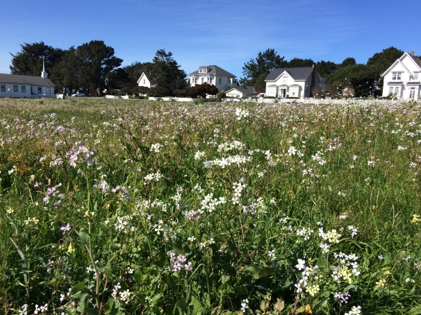 Perhaps this field of flowers can help ease my sorrow?