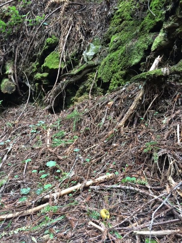 I spy…a banana slug, among the flotsam and jetsam of the forest. What else do you see?