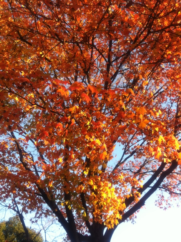 Photo: In just a few short months, the trees that are blooming now will turn orange, and red, and gold.