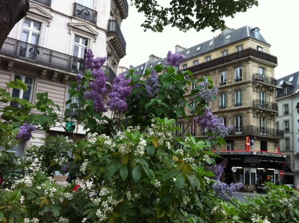 A roadside explosion of flowers, under the watch of Parisian buildings.