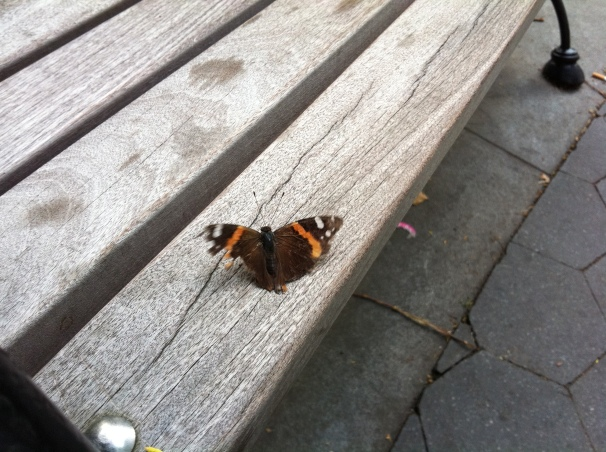 An introverted butterfly? Alone on a bench, he flapped and unflapped for quite a while as I watched.