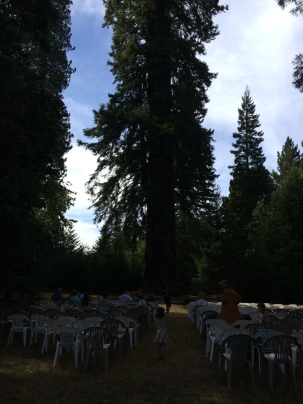 This tall tree provided the backdrop for the ceremony. Sorry for the terrible picture quality - it is darker under such massive redwoods!