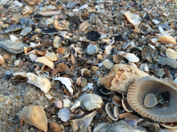 Shells on a sandy beach convince me that I'm a novice at the task of naming colors.